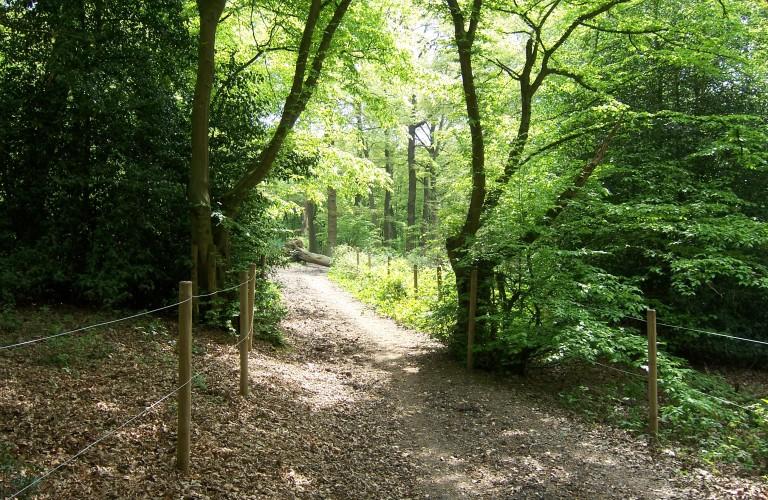 David_Brough_Cycle_Trail,_Bayhurst_Wood